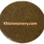Callistemon Viminalis Seeds